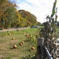 Elwood Pumpkin Farm