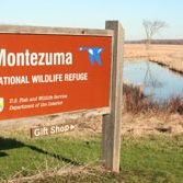 Montezuma National Wildlife Refuge