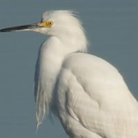Friends of Galveston Island State Park (FoGISP)