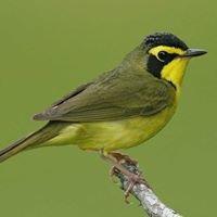 Beckham Bird Club - Louisville Birding