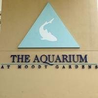 Aquarium @ Moody Gardens