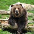 Behavioral Enrichment Animal Research (BEAR) group