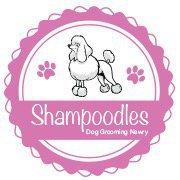 Shampoodles Newry
