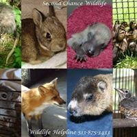 Second Chance Wildlife Rescue Association