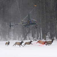 Helicopter Wildlife Services
