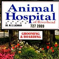 Riverhead Animal Hospital, Riverhead