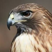 Prairie Rapids Audubon Society