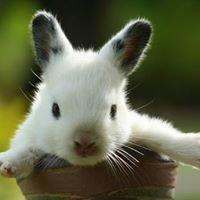Cute Animals ღ