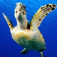 Provo Turtle Divers
