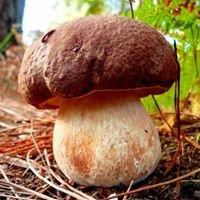 Cogumelos Como - Setas y fotografía micológica
