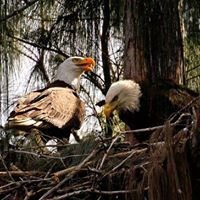South Florida Pine Eagle Nest , Inc.