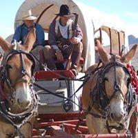 Antelope Island's Cowboy Legends