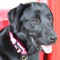 Black Dog Lawn Care