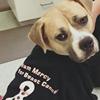 Mercy Animal Hospital, LLC