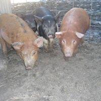 Duin Family Farm