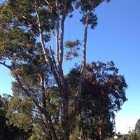 C&S Tree Services Nowra
