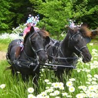 The Carriage Barn Equine Assisted Therapy Programs