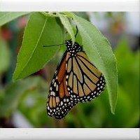 Exotic Gardening Farm & Wildlife Habitat