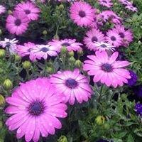 Alliance Floral Hoffhaus Gardens