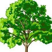 C & C Tree Service
