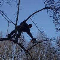 B&C Tree Service