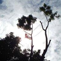 Island Treescape