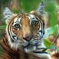 Nature Safari India, Conservation Through Tourism