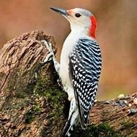 Wild Birds Unlimited/Kentwood