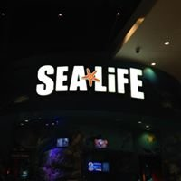 Orlando Sealife Aquarium