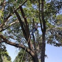C&P Tree Service