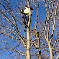 Tree Pros Tree Care