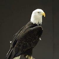 Alaska Bald Eagle Festival