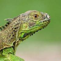 Zoocriadero de Reptiles UNAN-Managua