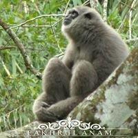 Banyumas Wildlife Photography - BAWOR