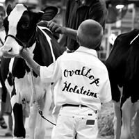 Ovaltop Holsteins