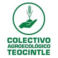Colectivo Agroecológico Teocintle