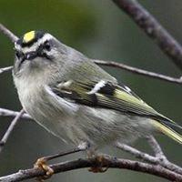 Grand Traverse Audubon Club