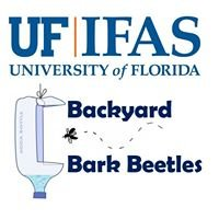 UF IFAS Backyard Bark Beetles