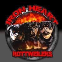 Iron Heart Rottweilers USA