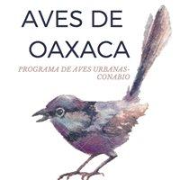 Aves EC