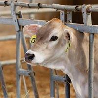El-VI Farms LLC