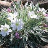 Desert Jewels Nursery