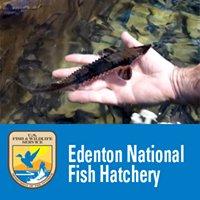 Edenton National Fish Hatchery