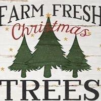 Seekonk Tree Farm