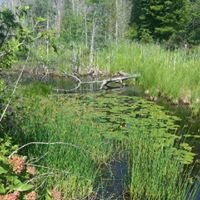 Walloon Lake Trust and Conservancy