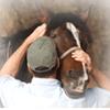 The Masterson Method, Integrated Equine Performance Bodywork