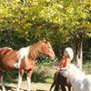 Spirit Horse Liberty Foundations with Ruella Yates