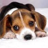 dogcratesdogbeds.com