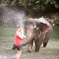 Bukit Lawang Orangutan Sumatra - BOS