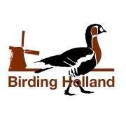 Birding Holland